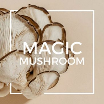 Magical Mushrooms are a key ingredient for Summer